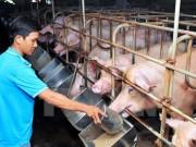 Bộ Tài chính chung tay gỡ khó với ngành chăn nuôi