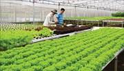 Phát triển chuỗi giá trị nông sản- Cần đến vai trò của doanh nghiệp dẫn đầu