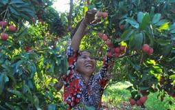 Cùng nông dân làm kinh tế nông nghiệp- Những tín hiệu vui