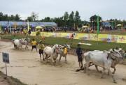Hội đua bò Bảy Núi 2017