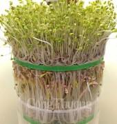 Thiết bị làm rau dinh dưỡng Happy - giải pháp hữu ích cho người tiêu dùng