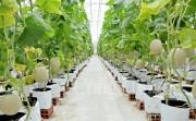 Sản xuất nông nghiệp công nghệ cao theo hướng bền vững