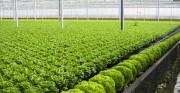 Thúc đẩy tái cơ cấu ngành nông nghiệp tại Hải Phòng