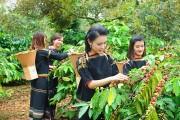 Cà phê Việt Nam chất lượng cao