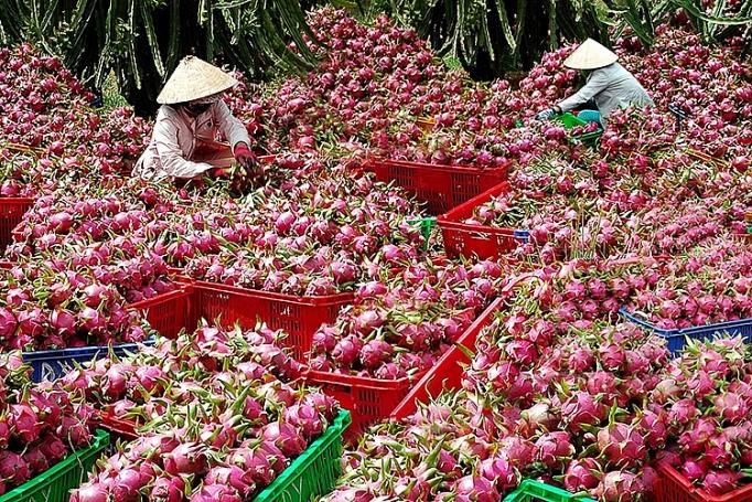 xuat khau nong san sang trung quoc phai huong den chinh ngach