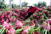 Thanh long Việt Nam tham gia Hội chợ quốc tế trái cây ở Berli