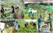 Hỗ trợ kinh phí chuyển giao công nghệ cho nông thôn, miền núi