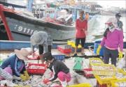 TT Huế: Từ ngày 20/2 tăng phí sử dụng cảng cá