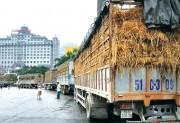 Sôi động xuất nhập khẩu tại cửa khẩu
