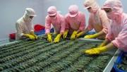 Úc kiểm tra chuỗi sản xuất tôm xuất khẩu tại Việt Nam