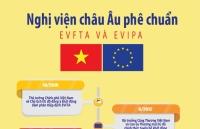 infographic tien trinh nghi vien chau au phe chuan evfta va evipa