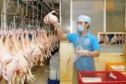 Xuất khẩu gà Việt: Hướng đến thị trường Nhật Bản