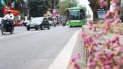 Hà Nội: Dừng triển khai tuyến buýt nhanh BRT 02 Kim Mã-Hòa Lạc