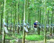 Doanh nghiệp Việt đầu tư sang Lào: Vướng nhiều rào cản