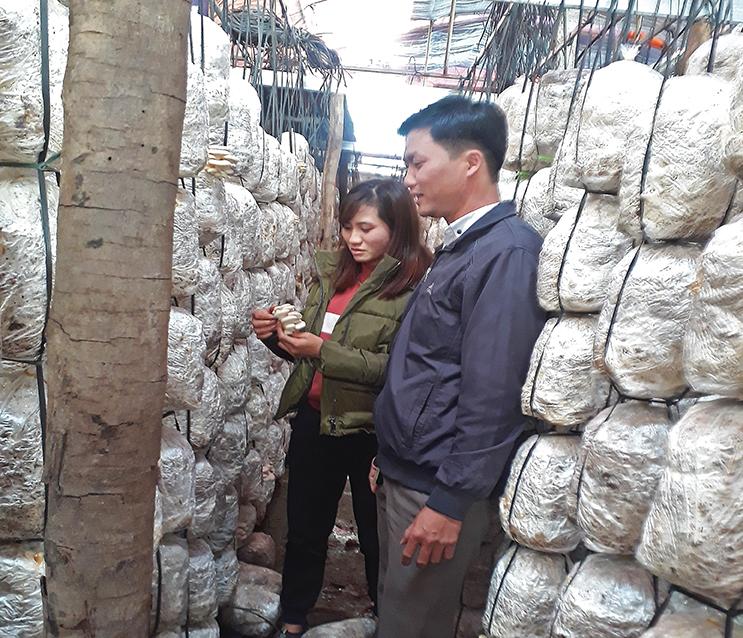 Nâng cao năng suất trồng nấm bằng công nghệ mới