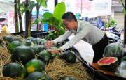 """Thanh niên Khánh Hòa """"giải cứu"""" dưa hấu giúp nông dân Quảng Ngãi"""