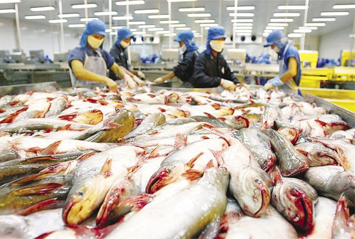 Xuất khẩu cá tra bền vững: Cần song hành cùng truyền thông