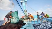 Quảng Bình hỗ trợ hơn 17 tỷ đồng cho ngư dân các địa phương