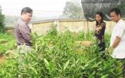 Tây Nguyên: Thận trọng mở rộng diện tích cây mắc ca