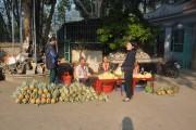Trái dứa Mường Chà giúp dân thoát nghèo