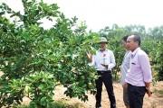 Ứng dụng công nghệ cao vào nông nghiệp: Hình thành các mô hình đột phá