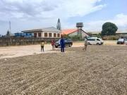 Nigeria- Nhà cung cấp điều nguyên liệu chủ yếu cho Việt Nam