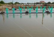 EVN SPC nhân rộng mô hình tiết kiệm điện tại các vùng nuôi tôm công nghiệp