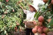 Để rau quả Việt Nam đứng vững trên thị trường