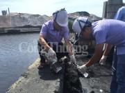 Quảng Ninh: Ngành than phải thực hiện giải pháp bảo vệ môi trường