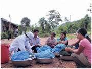 Cách để sốt rét rừng không thể phát tác (PII)
