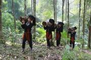 Viễn Sơn (Yên Bái): Nâng cao giá trị cây quế