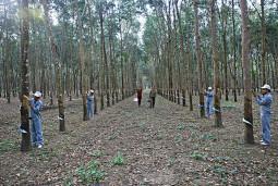Những công nhân làm chủ núi rừng biên giới