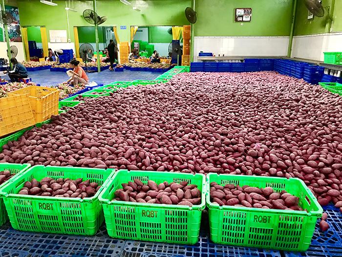 Đầu tư để xuất khẩu nông sản bền vững