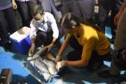 Quảng Bình hỗ trợ gần 26 tỷ đồng cho các cơ sở thu mua hải sản