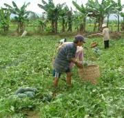 Tăng cường vai trò của doanh nghiệp trong tiêu thụ nông sản vùng đồng bào dân tộc