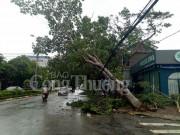 Nghệ An hơn 5.755 cột điện bị gãy đổ