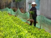 Kiểm tra việc sản xuất, kinh doanh giống cây trồng