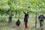 Tìm đầu ra cho nông sản miền Tây xứ Nghệ