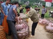 Giá thịt lợn tăng, thận trọng tái đàn