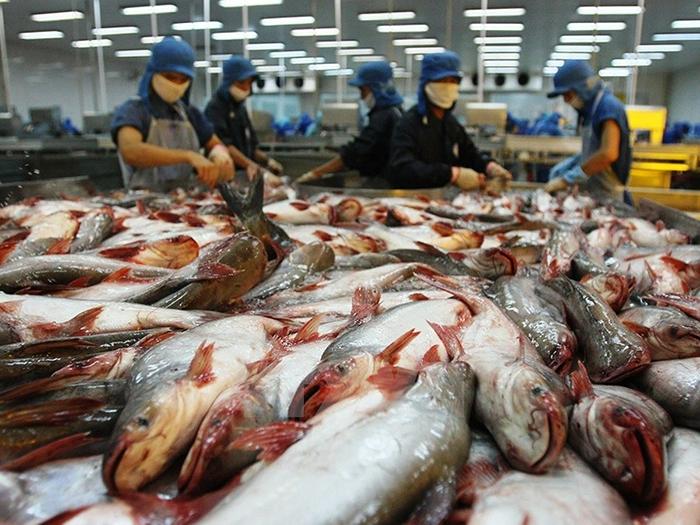 Cá da trơn Việt Nam bị áp thuế chống bán phá giá tại thị trường Hoa Kỳ