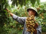 Nâng tầm giá trị nông sản
