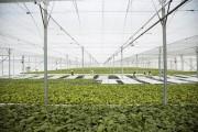 Vingroup liên kết với 1.000 đơn vị cung ứng nông sản sạch và an toàn