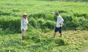 Đắk Lắk: Phát triên cây công nghiệp mới