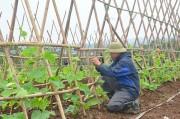 Công nghệ sinh học giúp đồng bào xóa đói, giảm nghèo