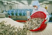 Đến 2020, xuất khẩu thủy sản phấn đấu đạt 8-9 tỷ USD