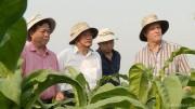 Vinataba: Tăng cường quản trị doanh nghiệp, phát triển bền vững