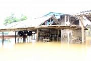 Nước sông Lam dâng cao, 11.000 người dân bị cô lập hoàn toàn
