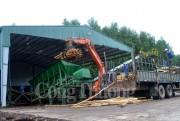 Hiệu quả chương trình khuyến công hỗ trợ chế biến dăm gỗ từ nguyên liệu gỗ rừng trồng