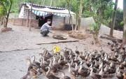 Ninh Bình: Phát triển kinh tế trang trại gắn với xây dựng nông thôn mới
