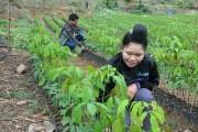 Hiệu quả từ chính sách chi trả dịch vụ môi trường rừng